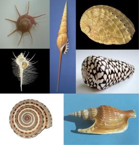 Diversidad de conchas en los gasterópodos marinos: